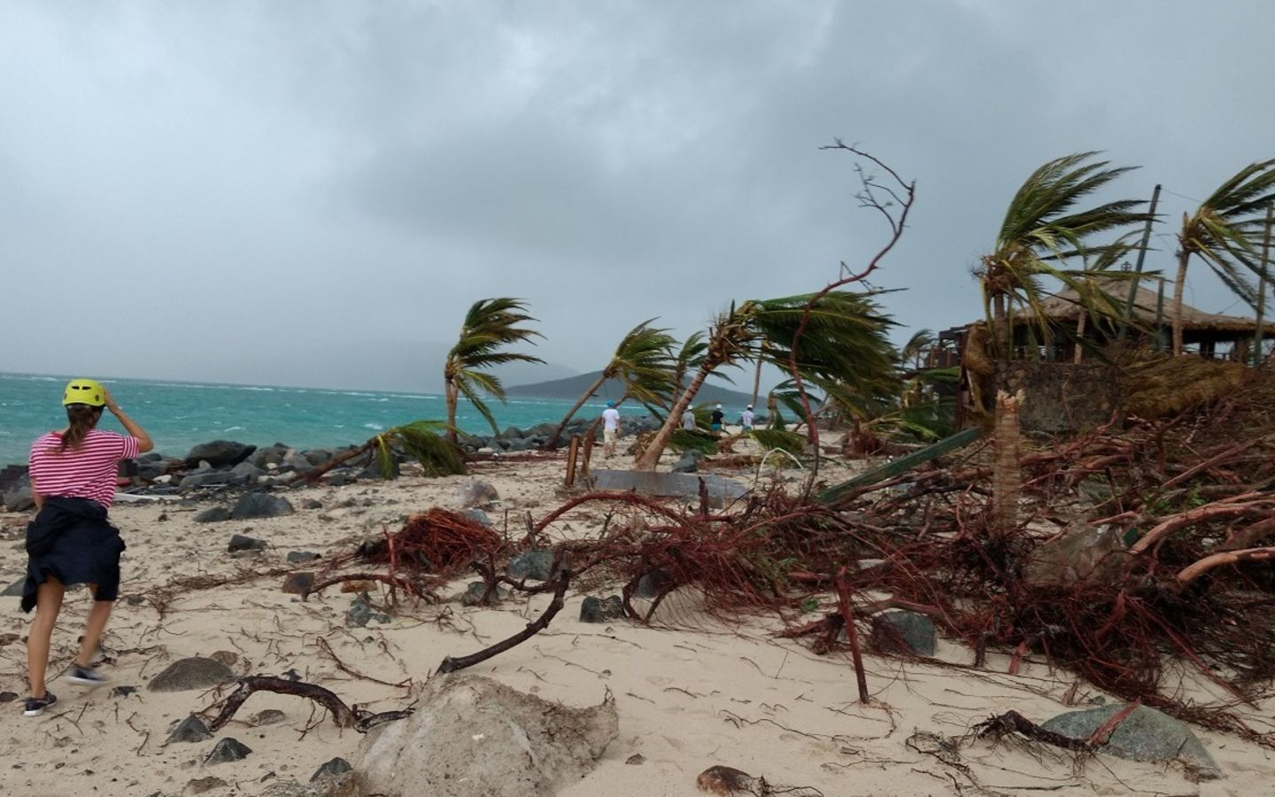 Destroyed trees on the beach