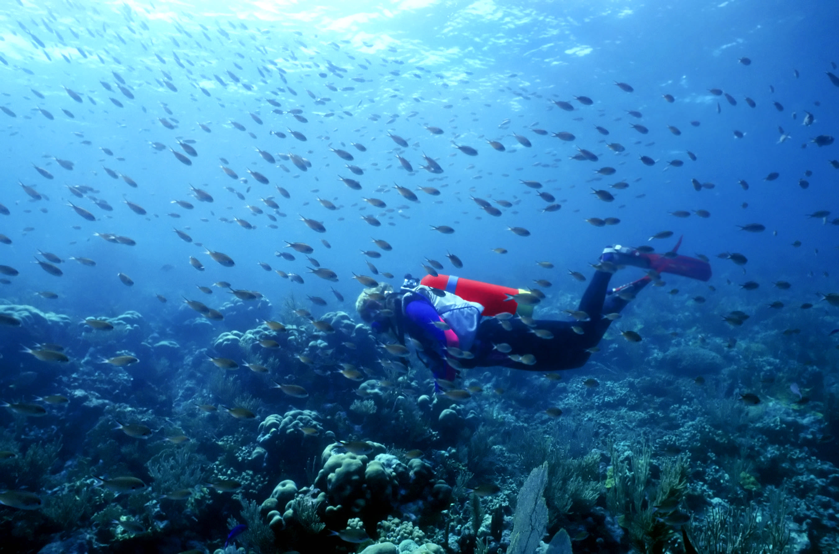 A scuba diver underwater with fish