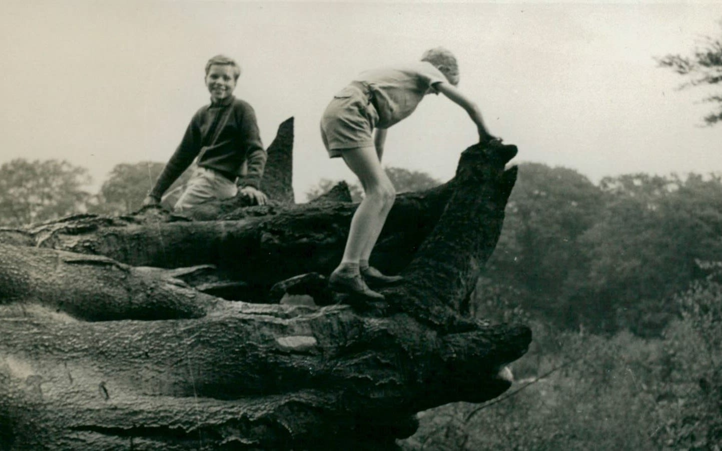 Black and white image of Richard Branson as a boy climbing a fallen tree