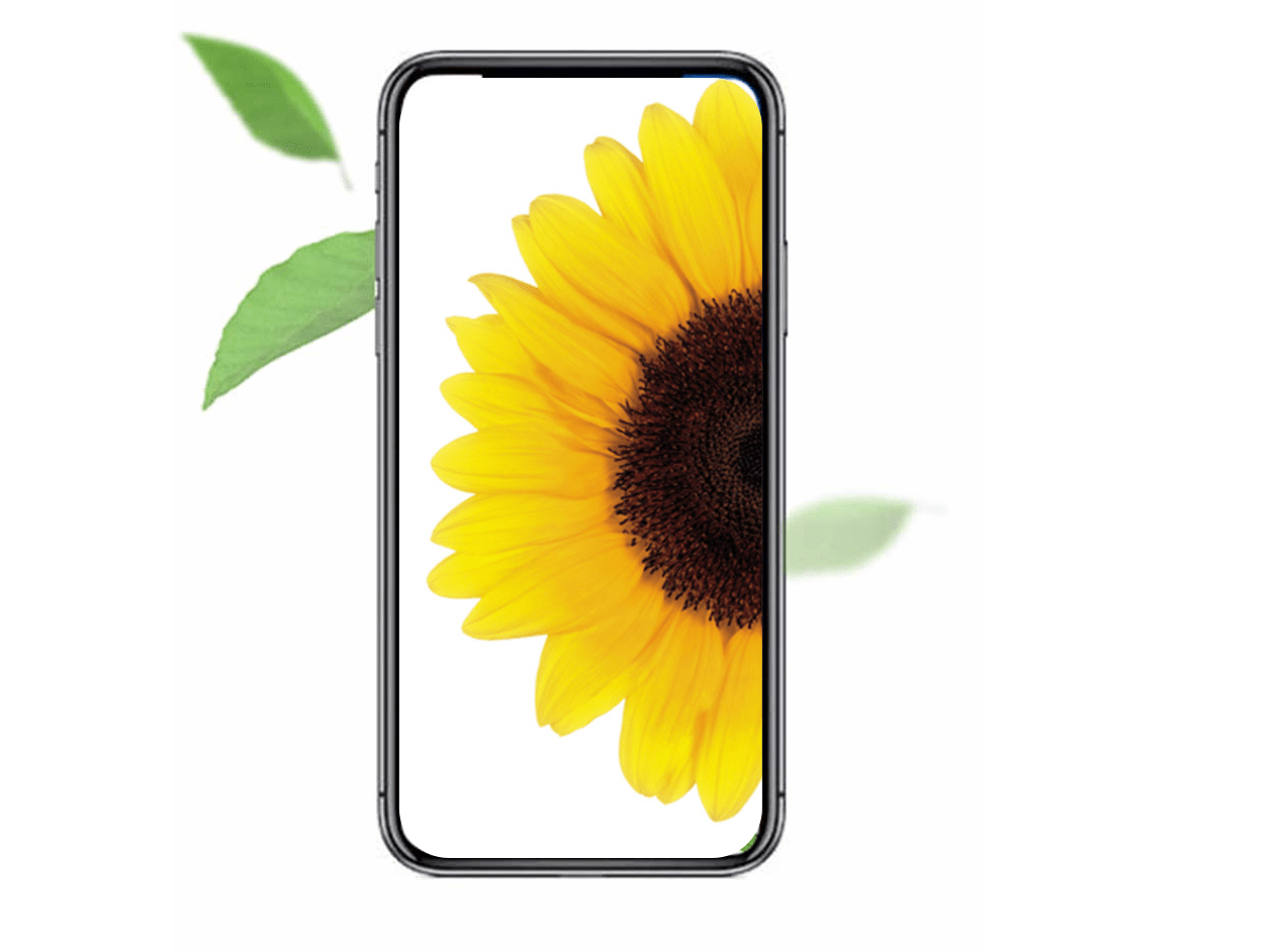 Sunflower in phone