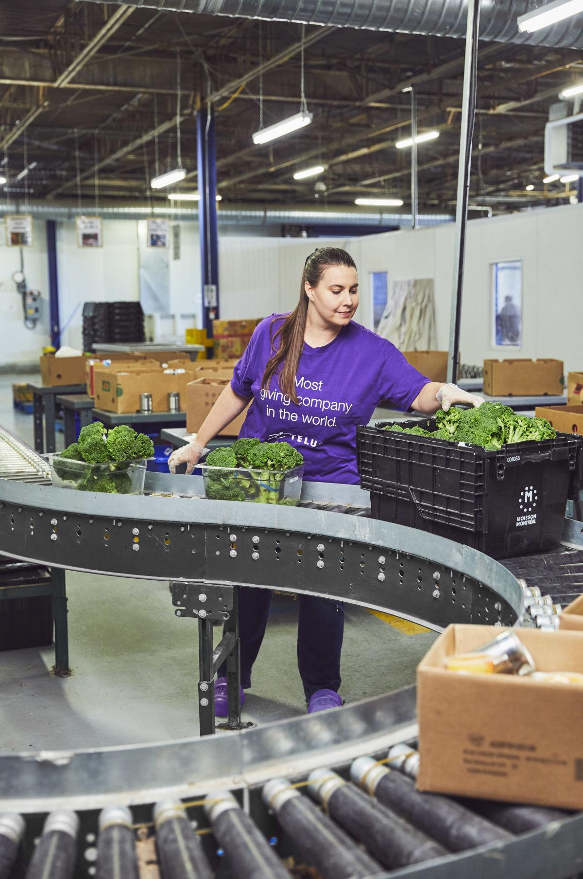 Jennifer Kirby sorting broccoli on a conveyor belt