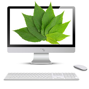 Green leaves in computer