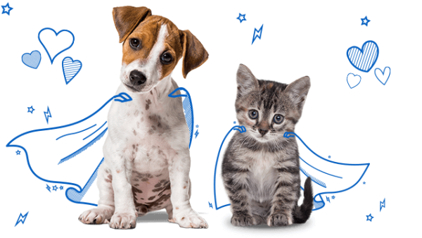 Yorkshire terrier puppy and silver tabby kitten wearing cape illustrations