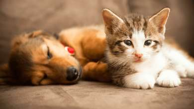 Puppy and kitten sat on a sofa
