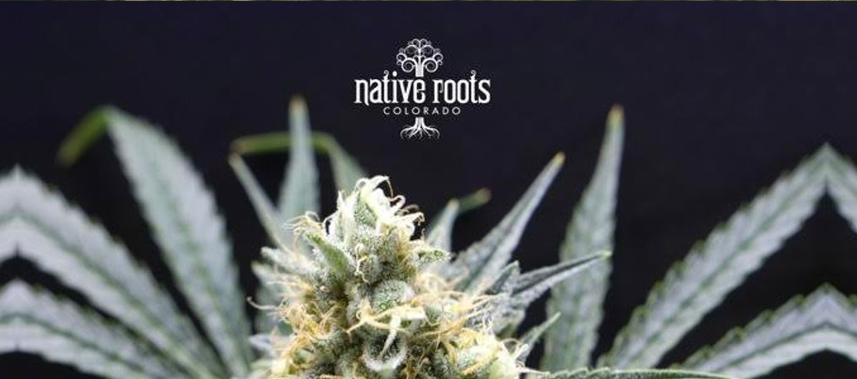 Pot Leaf with the Native Roots Cannabis Company Old Logo