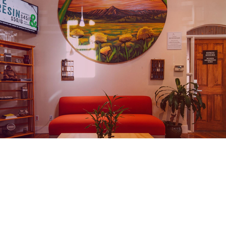 Canna Coach | Boulder Dandelion