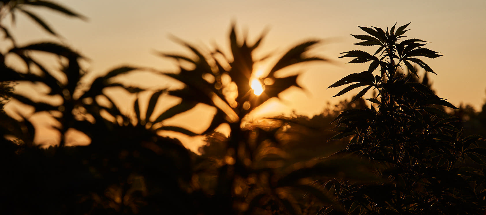 Sunrise at Frangiosa Farms & Colorado Hemp Honey