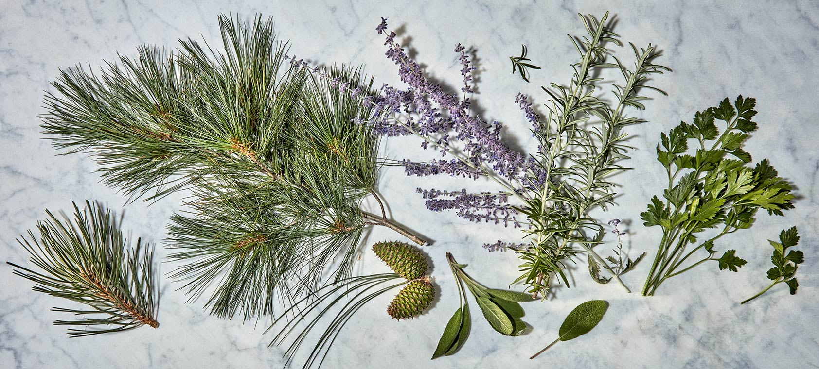 These are some of the plants that contain high levels of the terpene Pinene which has shown to be an anti-inflammatory.   They include; pine, sage, Russian sage, rosemary, and parsley.