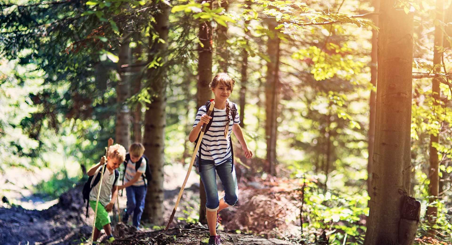 Familienerlebnisse im Wald