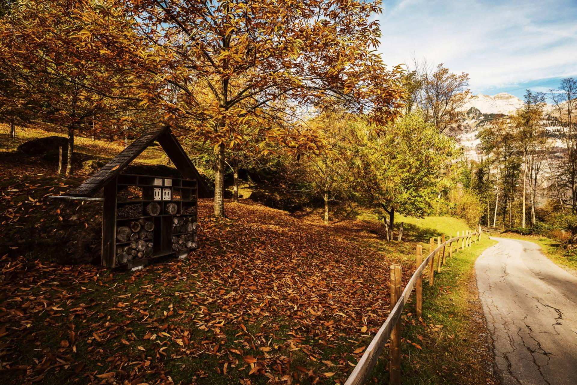 Kastanienwald in Murg / S4