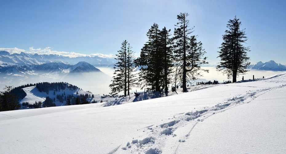 mys-Schneeschuh-Traum auf der Rigi (Kombi)-Schneeschuhpfad.jpg