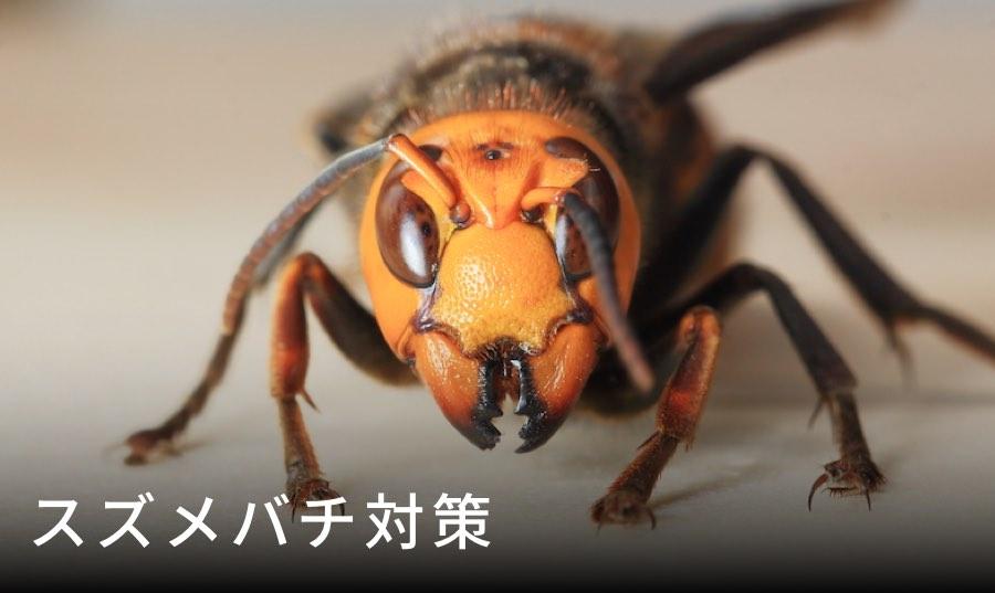 オオスズメバチ 天敵