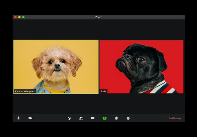 Screenshot of two dogs Zoom calling each other.