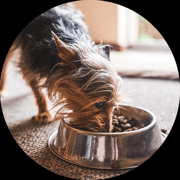 Yorkshire Terrier Napf Bubble