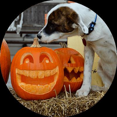 bubble-hund-kuerbis-halloween