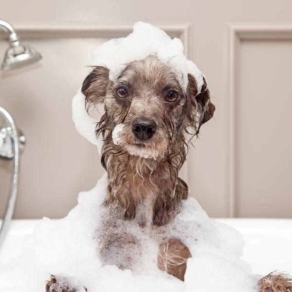 210526 LP Bubble Puppy Bath