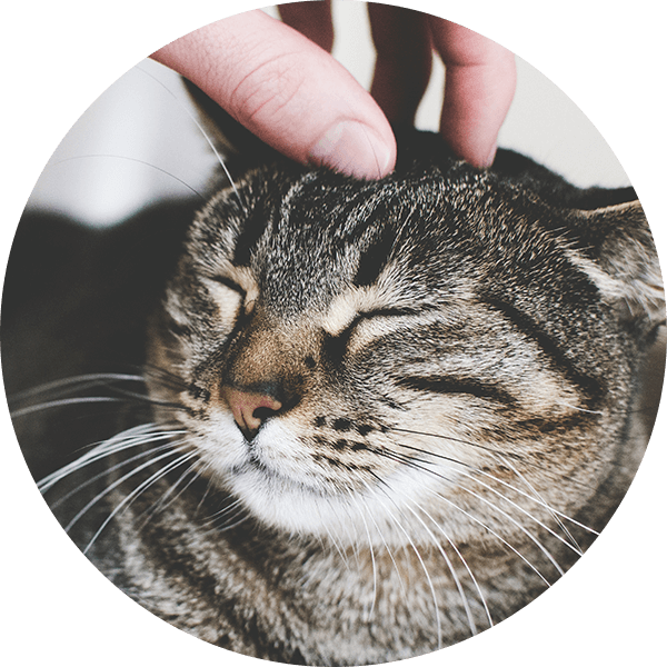 Pets Deli Katze anschmiegen