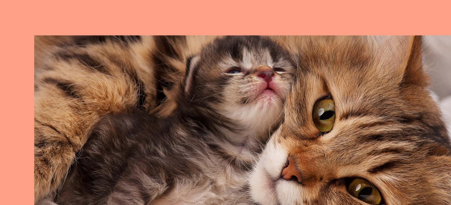 CDP-header-mobile-katze-kitten
