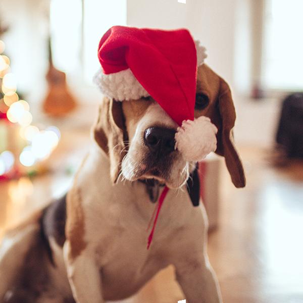 Bubble-Hund-Weihnachten