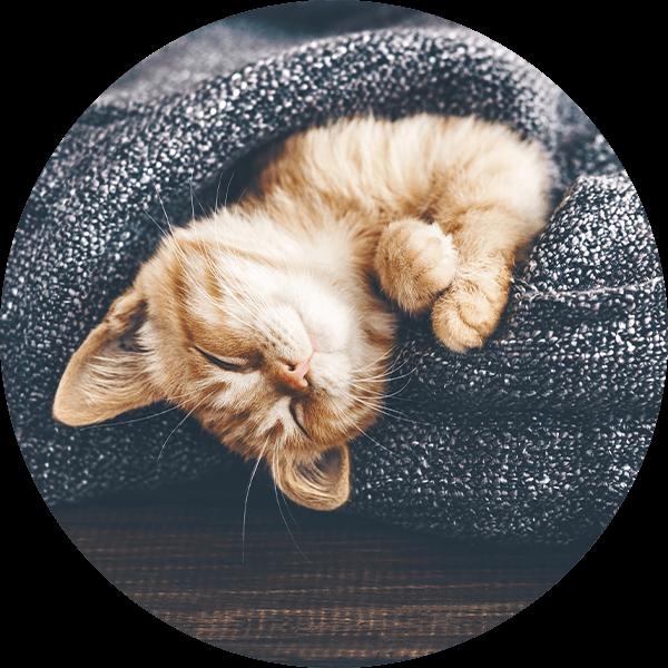 PD-Bubble-Katze Schlafend-600px