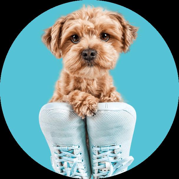 Unserer Ratgeberthemen für Hunde