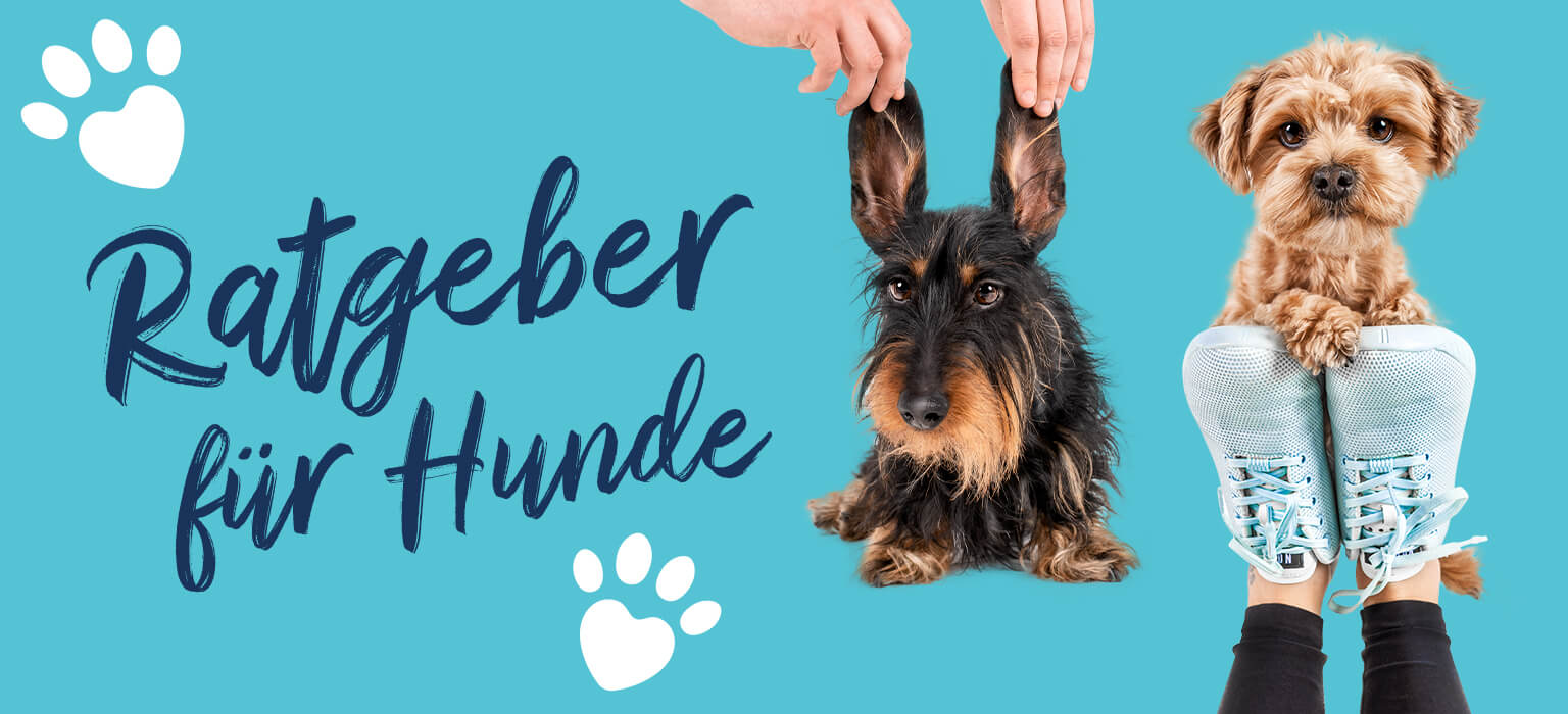 Ratgeber-Header-Mobile-Dog