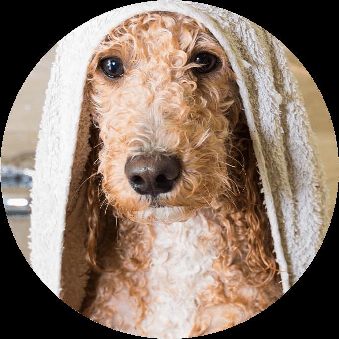 Hund im Badehandtuch