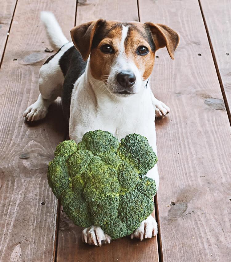 header-mobil-brokkoli