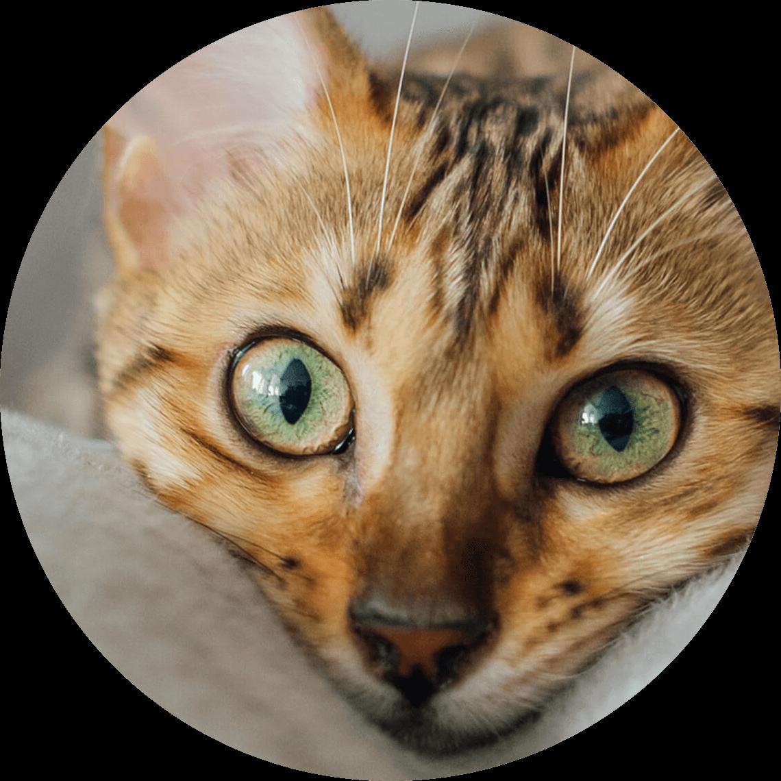Kuschelnde Katze