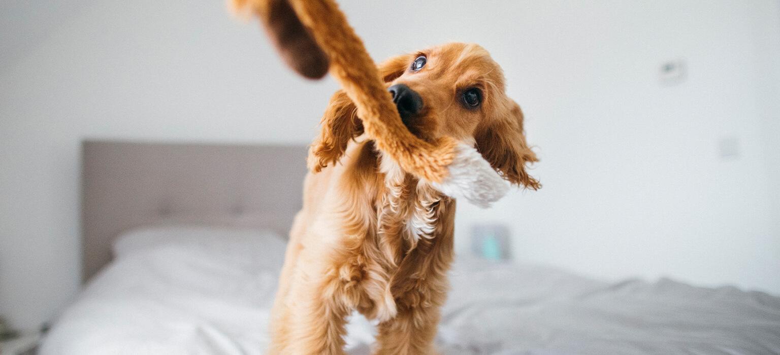 CDP-Header-Mobile-Corona-Hund