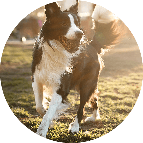 PetsDeli-LP-GesundesTierfutter-Benefits-Verdauung
