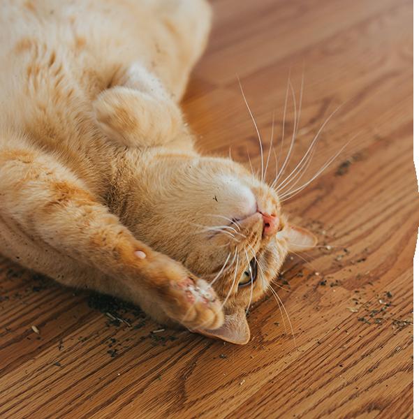 Bubble-Katze-Catnip