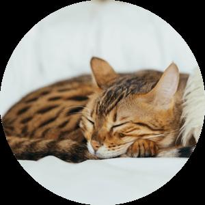 Katze Benefits Verdauung