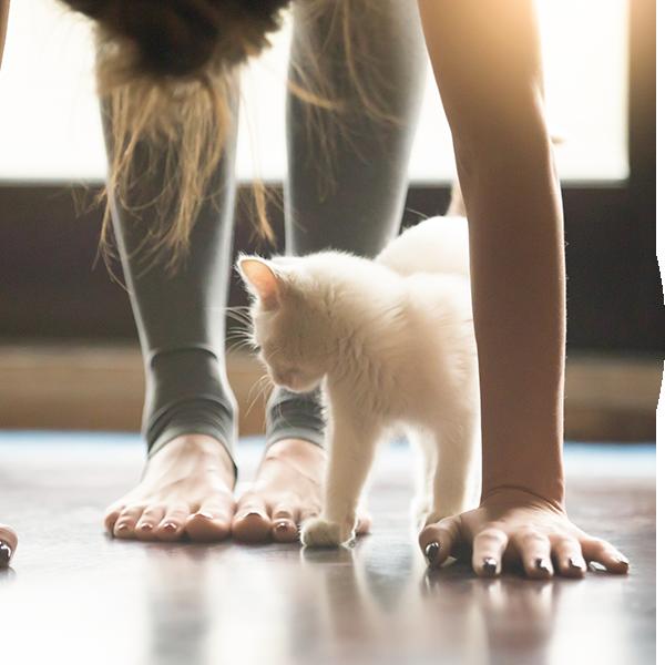 Bubble-Katze-Yoga
