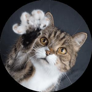 Katze Benefits Vital