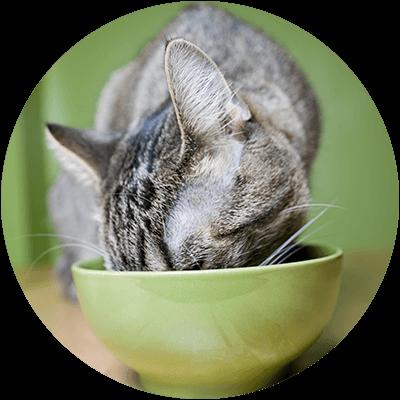 Bubble Katze frisst