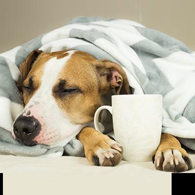 bubble-hund-kaffeetasse