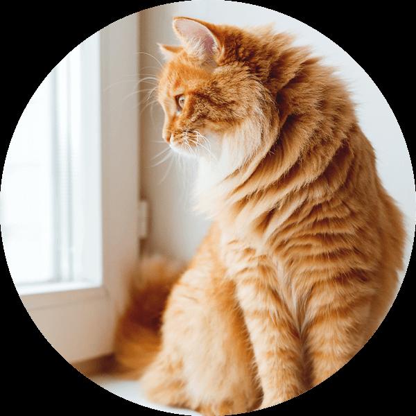 PetsDeli-Hanfoel-Typ-GlaenzendesFell-Katze