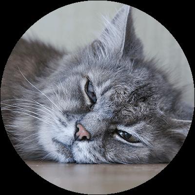 Bubble Katze Muede krank