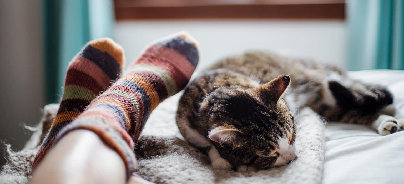 Pets Deli Katze liebt Menschen