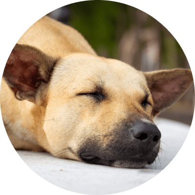 Bauchweh Hund
