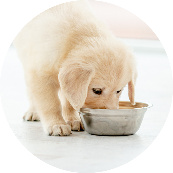 210526 LP Bubble Puppy Eating
