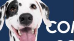 210614 CDP Mobile Labrador