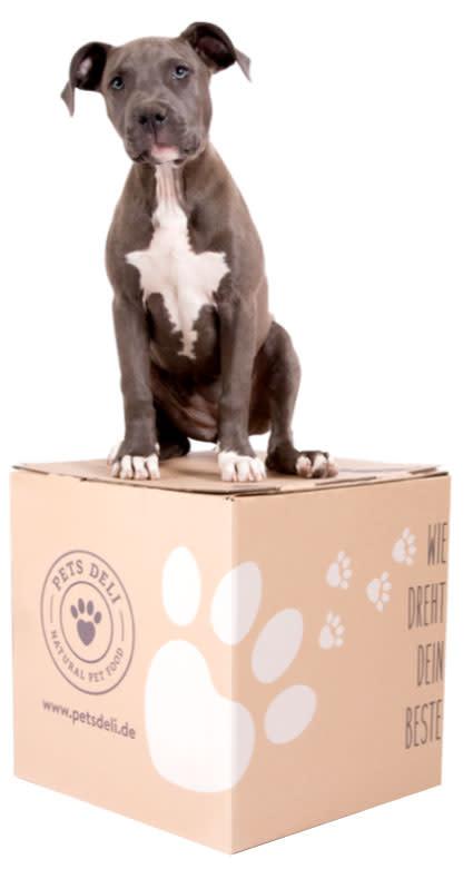 Hund-auf-Box