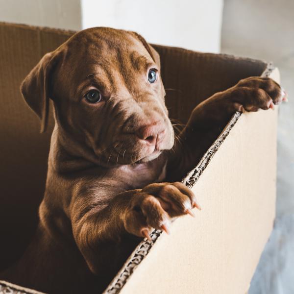 210526 LP Bubble Puppy Box