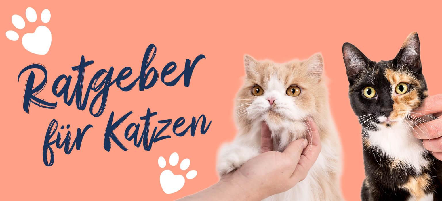 Ratgeber-Header-Mobile-Cat