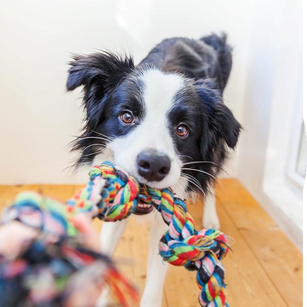 Bubble-Hund-Yoga