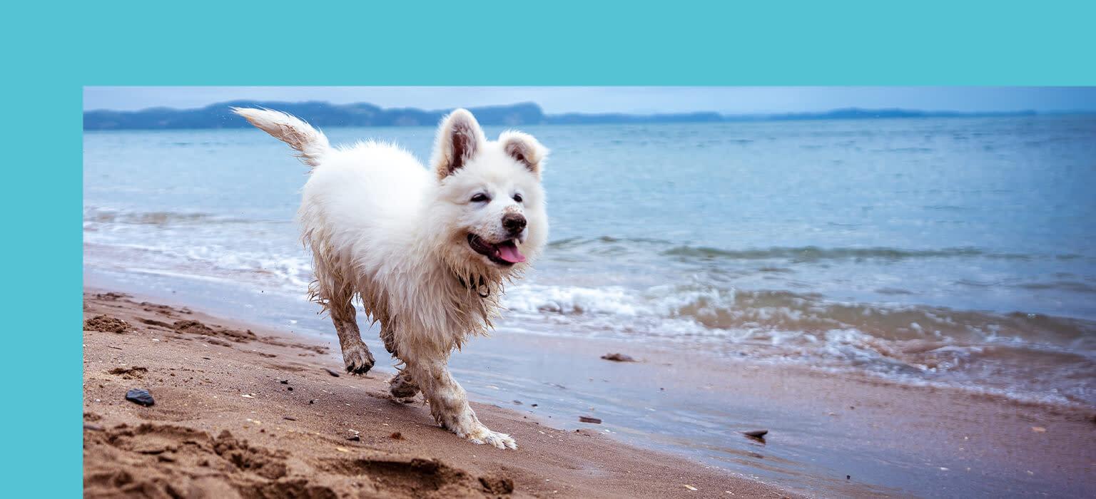 CDP-header-mobile-hund-sommer
