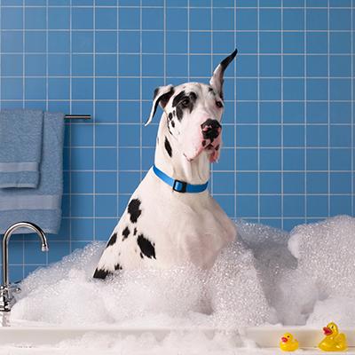 bubble-hund-hygiene