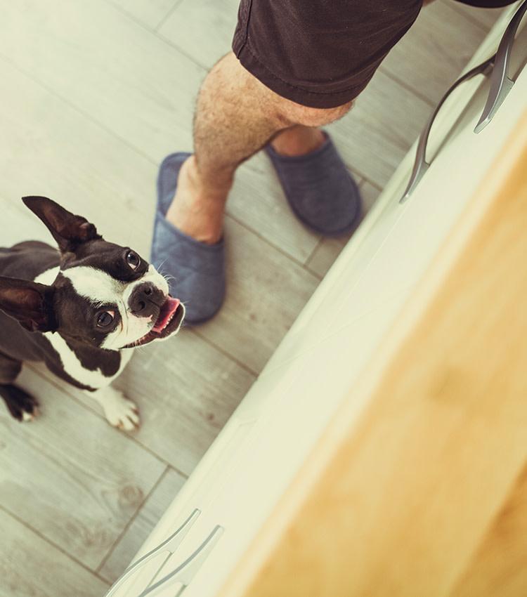 header hund kuechentheke-mobil